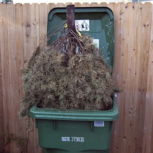 how to get an extra rubbish bin takanini