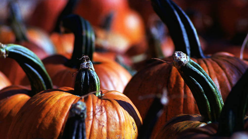 Halloween in Lincoln 2013. Photo: Flickr DeusXFlorida