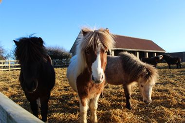 Bransby Horses rescue and welfare centre.
