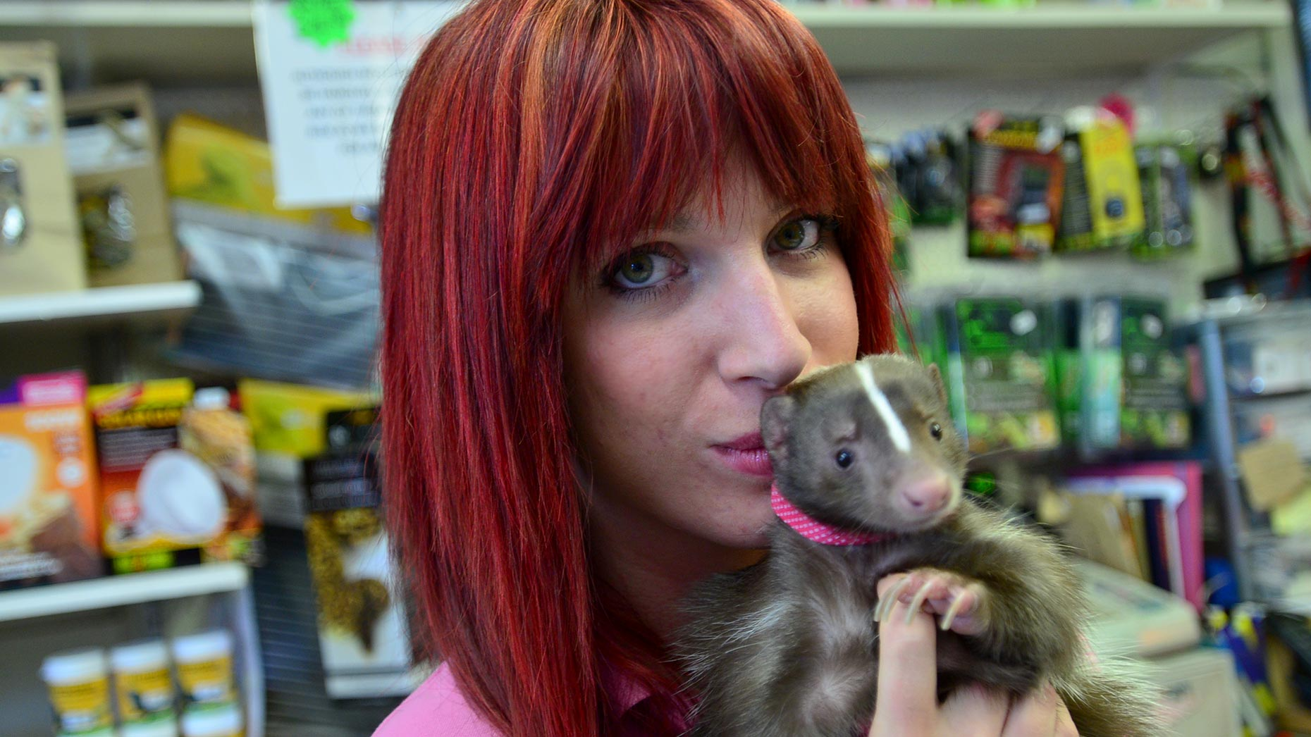 Shop owner Alyss Dickinson with Lily the skunk. Photo: Steve Smailes for The Lincolnite