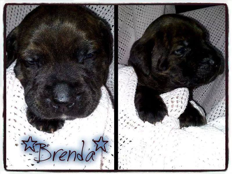 Brenda the rescue puppy. Photo: PinPoint Media