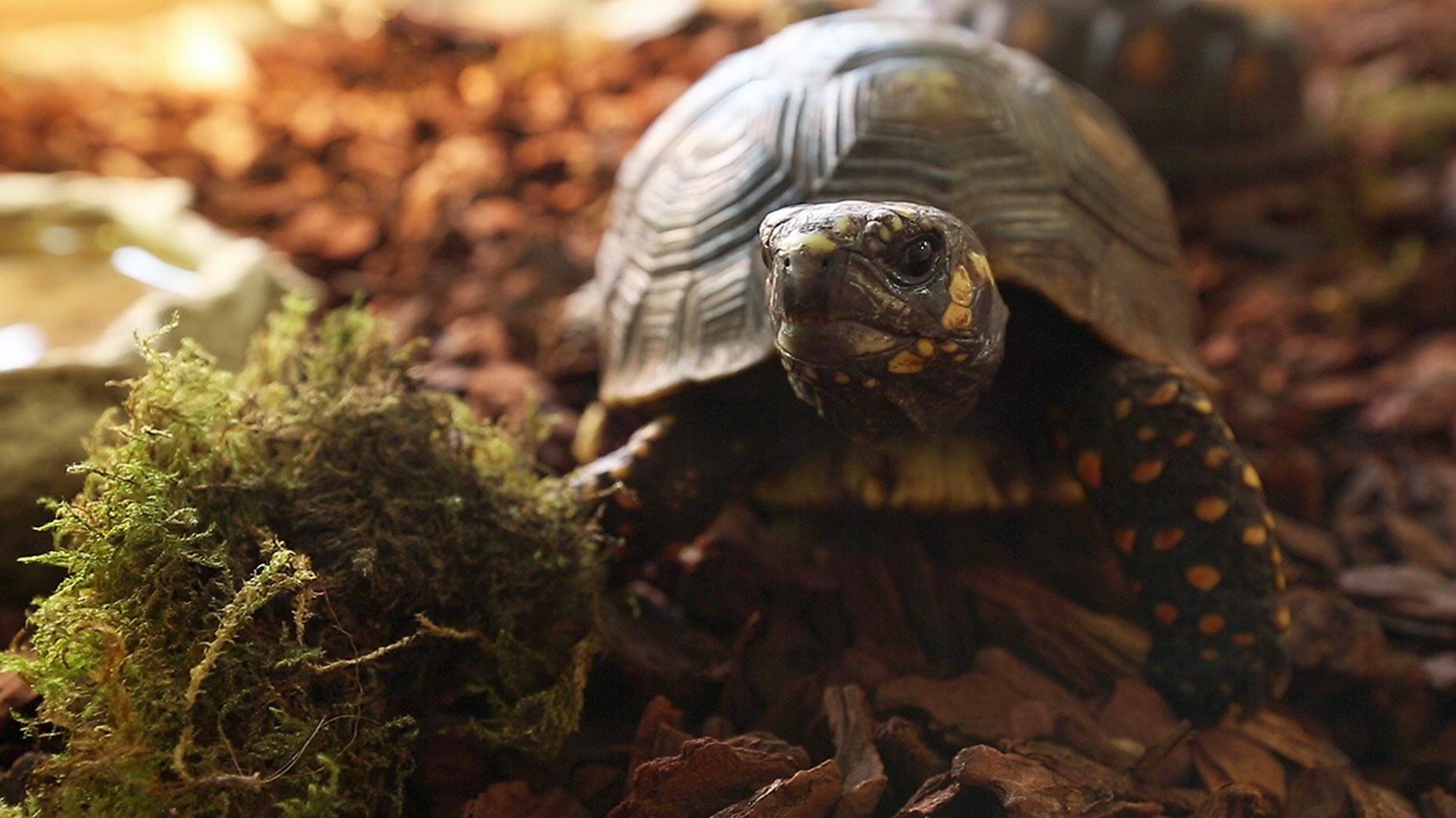 uni-tortoise-1