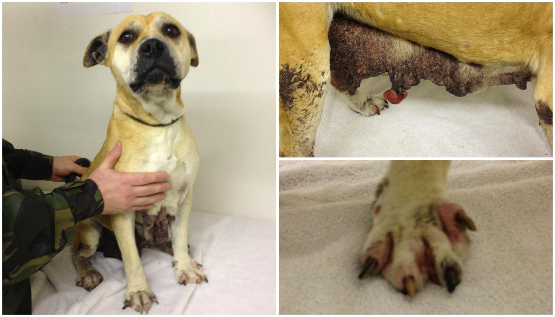 Ingham Dog Rescue Kennels