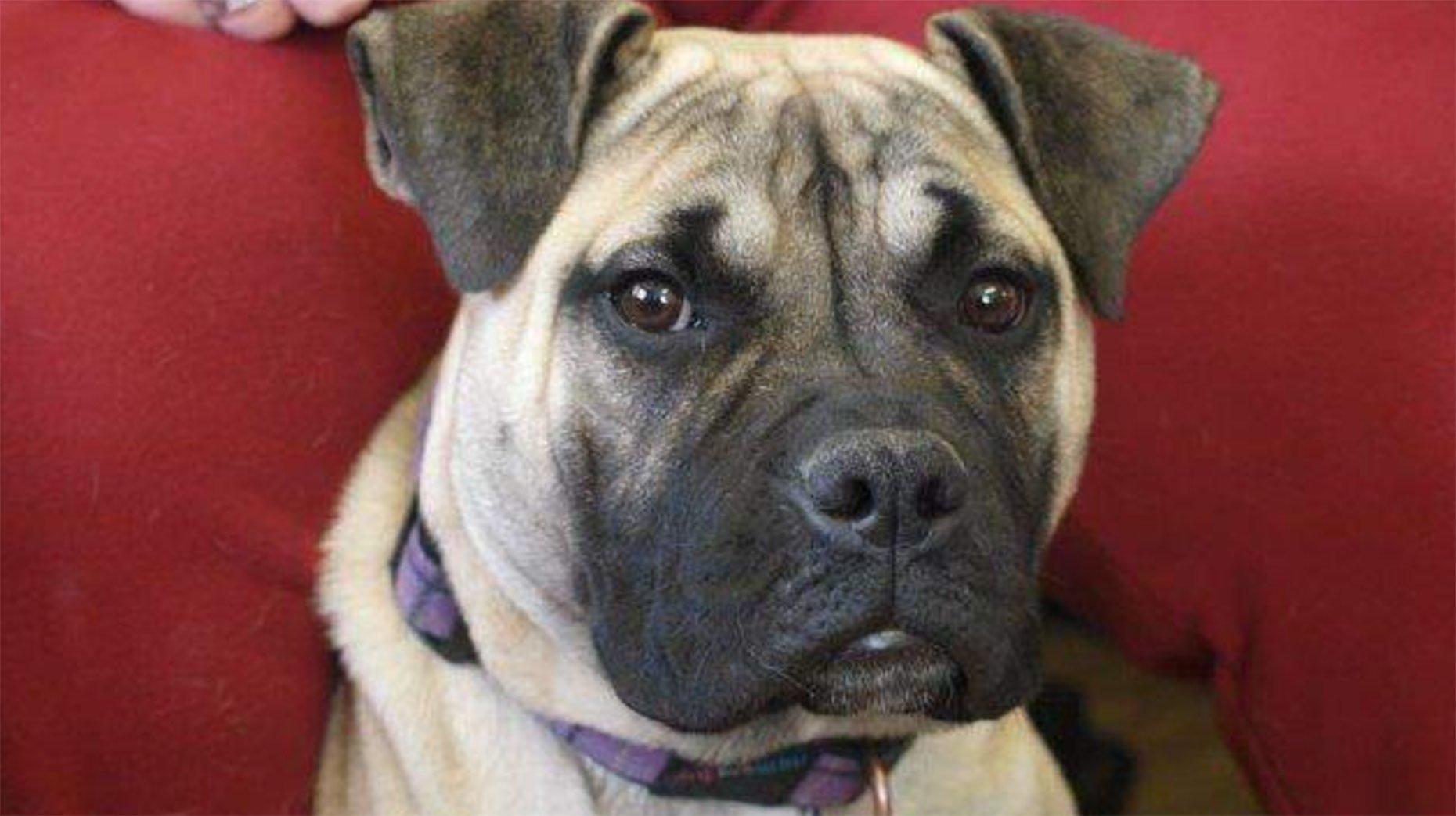 Photo: Three Counties Dog Rescue