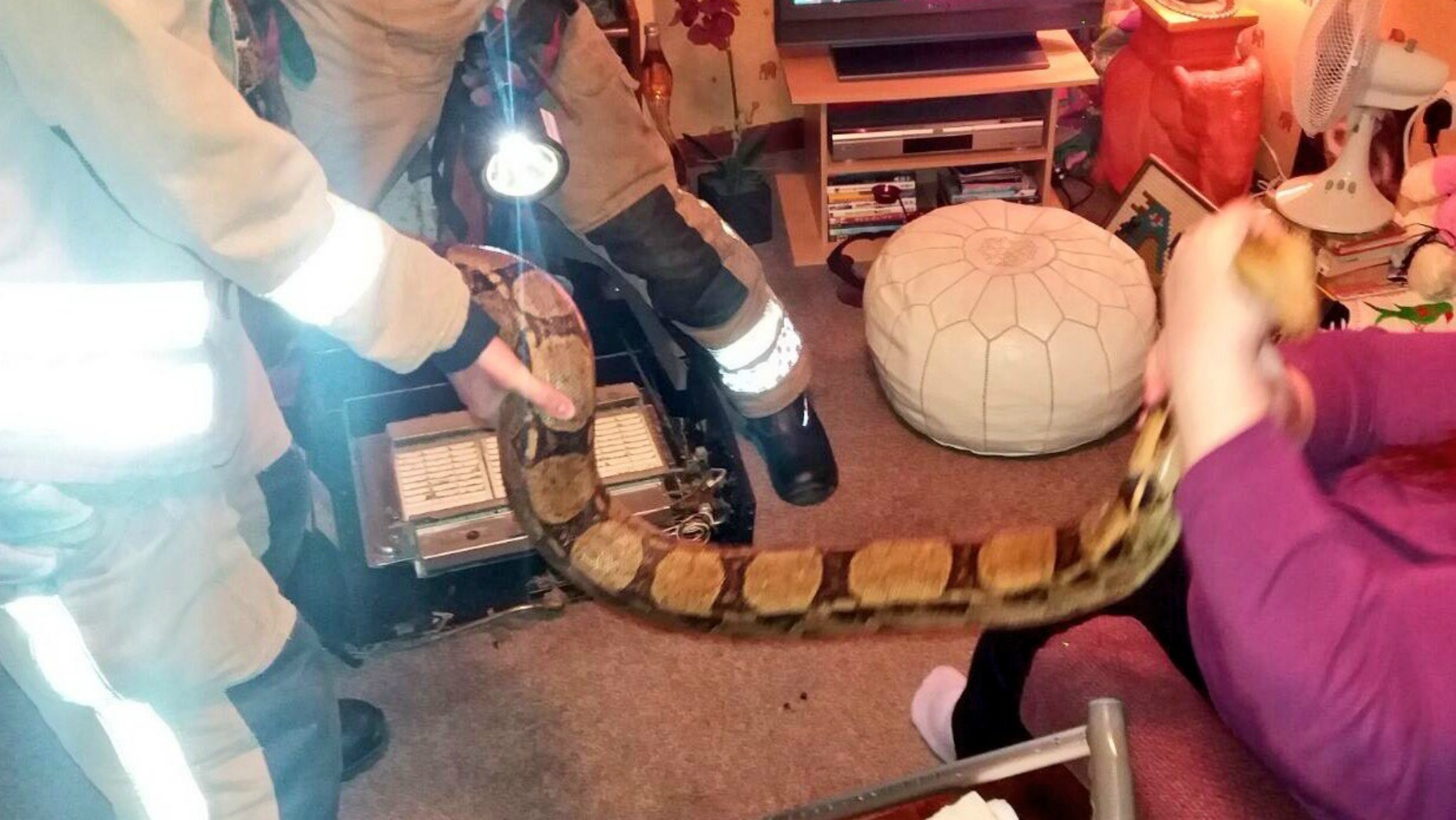The 8ft long snake had become trapped in parts of the fire. Photo: Gainsborough Fire and Rescue
