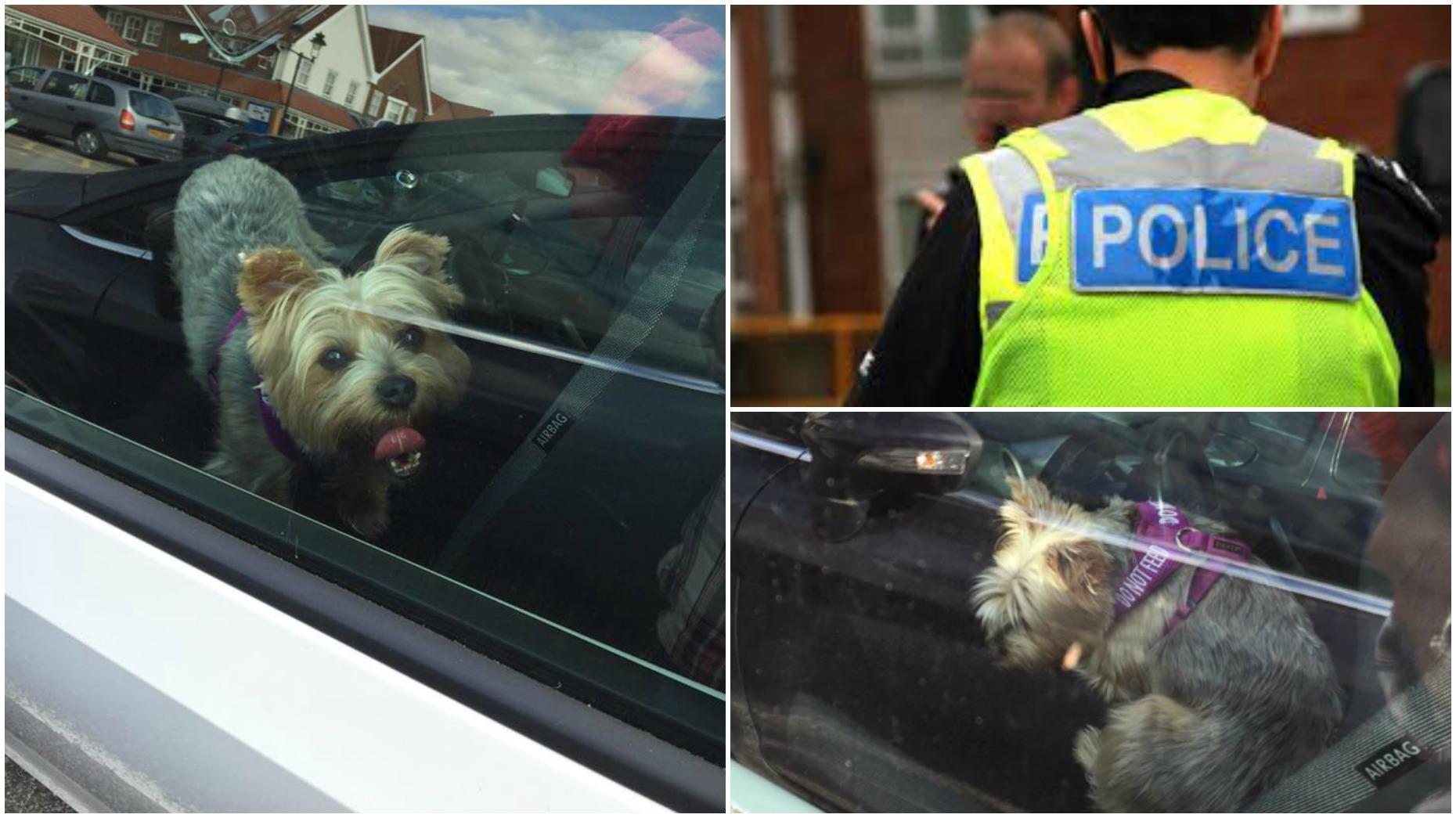 Police Advice Dog In Hot Car