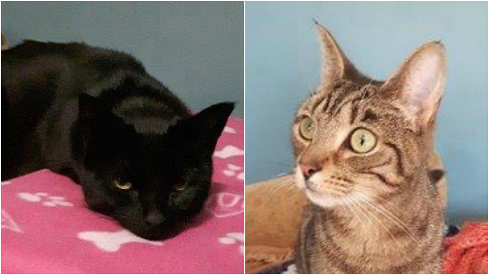 Suzie (left) and Warran (right)
