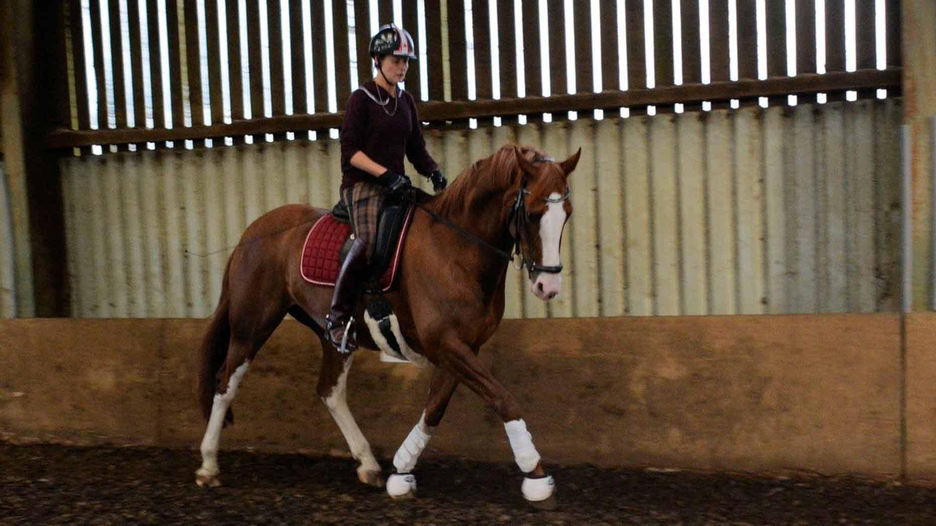 Roberta 'Bert' Sheffield training for the Paralympics 2016. Photo: Bert Sheffield Para Equestrian Rider