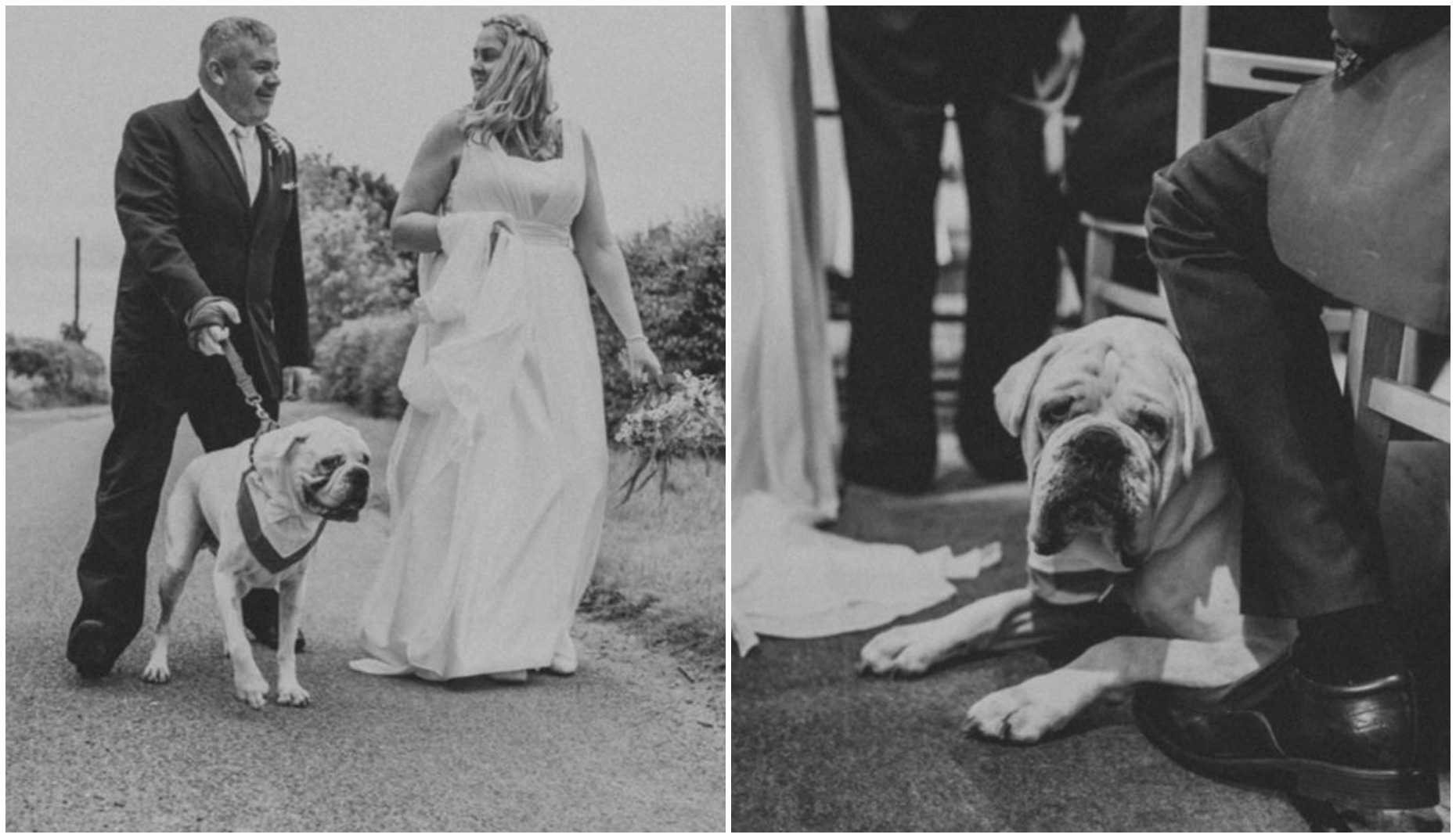 Emma and Shaun's wedding day wouldn't have been complete without Buster.