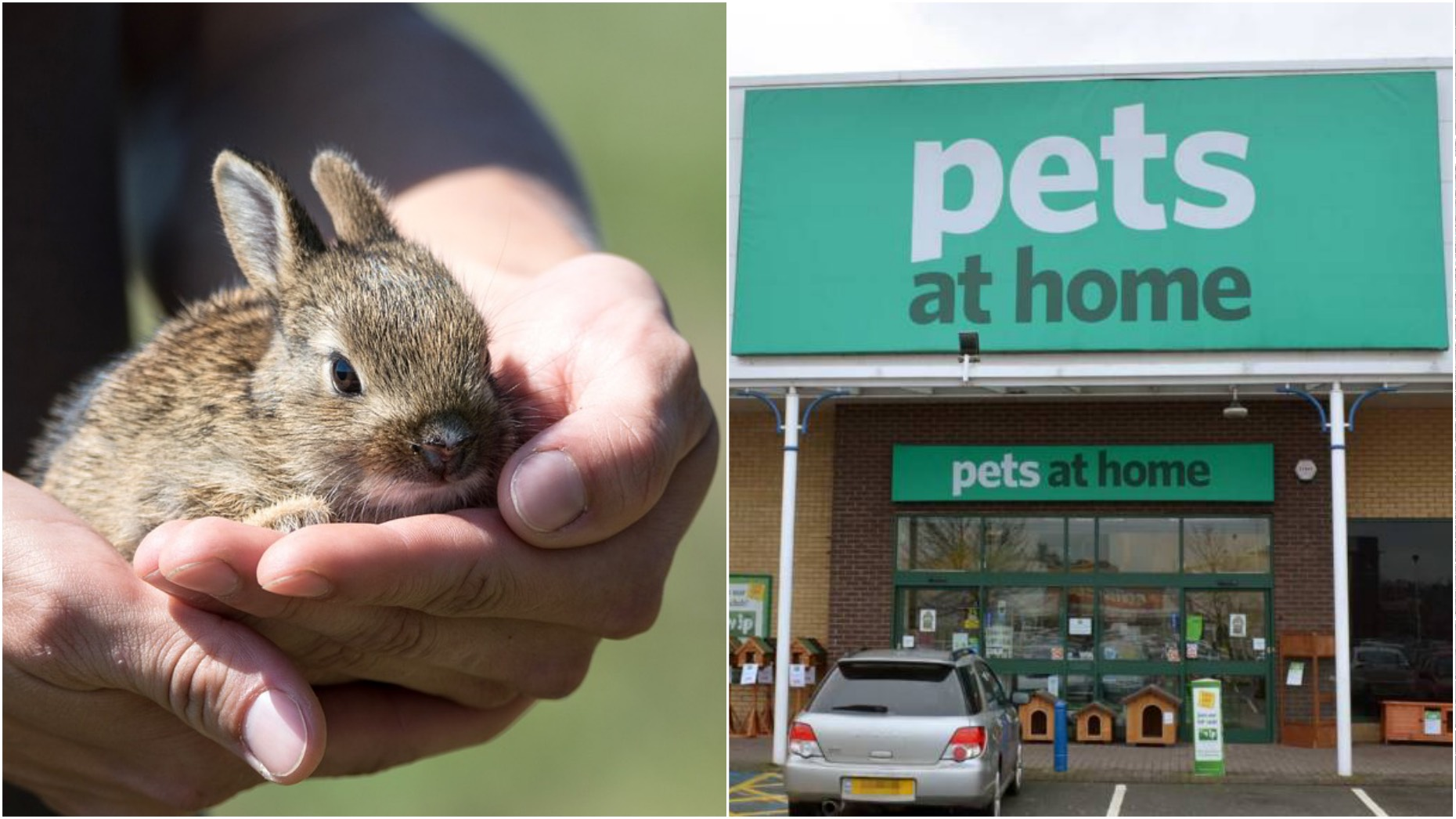 two lincoln pet stores to ban the sale of rabbits over